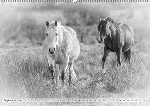Emotionale Momente: Weiße Pferde in schwarzweiß.