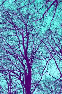 Premium Textil-Leinwand 50 cm x 75 cm hoch Winterbaum