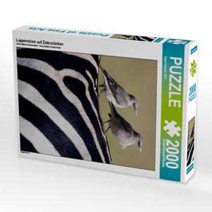 Lappenstare auf Zebrarücken 2000 Teile Puzzle hoch