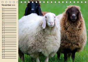 Schafe. Friedliche Rasentrimmer und Einschlafhilfen (Tischkalend