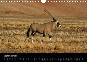 Namibia - Tierische Vielfalt