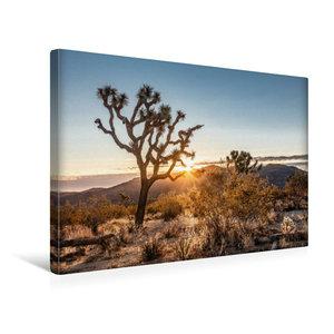 Premium Textil-Leinwand 45 cm x 30 cm quer Joshua Tree National