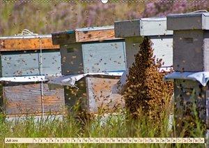 Die Welt der Imkerei: Blüten, Bienen, Honig (Wandkalender 2019 D