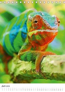 Reptilien hautnah