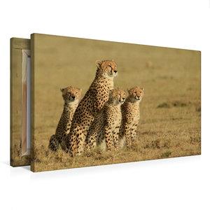Premium Textil-Leinwand 75 cm x 50 cm quer Geparden auf Beutesuc
