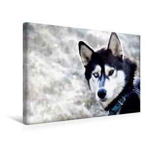 Premium Textil-Leinwand 45 cm x 30 cm quer Sibirische Huskys in