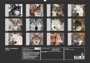 Wölfe (Wandkalender immerwährend DIN A2 quer)