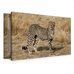 Premium Textil-Leinwand 75 cm x 50 cm quer Gepardin in der Savan
