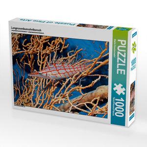 Langnasenbueschelbarsch 1000 Teile Puzzle quer