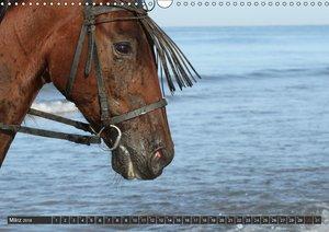 Caballos Spanische Pferde 2018