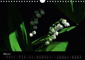 Blütenlicht - Gartenblumen und Blüten in ihrer reinsten Form