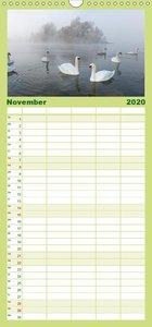 Mit dem Schwan durchs Jahr - Familienplaner hoch (Wandkalender 2