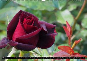 Die Namen der Rosen (Wandkalender 2019 DIN A2 quer)