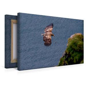 Premium Textil-Leinwand 45 cm x 30 cm quer Seeadler im Flug