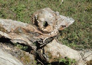 Waldgeister (Tischaufsteller DIN A5 quer)