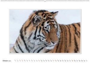 Emotionale Momente: Tiger - Kraft & Schönheit.