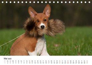 Süße Basenji-Kinder (Tischkalender 2020 DIN A5 quer)