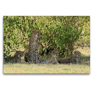 Premium Textil-Leinwand 120 cm x 80 cm quer Geparden unter schat