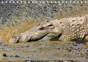 Krokodile in der Wildnis