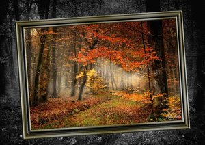 Alles im Rahmen - Sonne im Wald (Posterbuch DIN A2 quer)