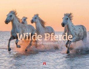 Wilde Pferde 2020