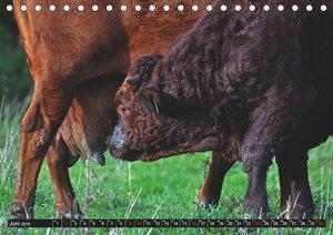 Das liebe Vieh (Tischkalender 2019 DIN A5 quer)