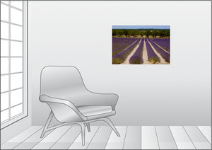 Premium Textil-Leinwand 75 cm x 50 cm quer Lavendelfeld in der P