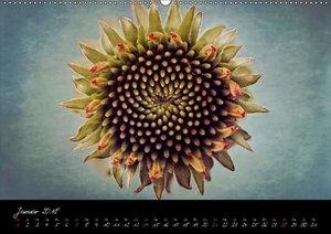 Blüten aus dem Makrokosmos