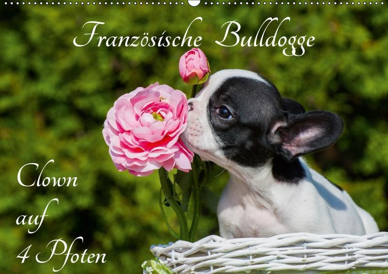 Französische Bulldogge - Clown auf 4 Pfoten (Wandkalender 2019 D - zum Schließen ins Bild klicken