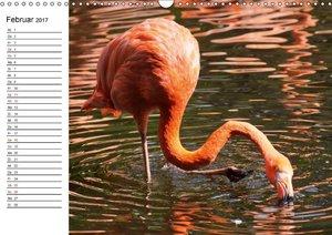 Elegante Flamingo