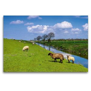 Premium Textil-Leinwand 120 cm x 80 cm quer Deichschafe