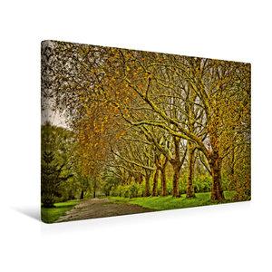 Premium Textil-Leinwand 45 cm x 30 cm quer Goldene Baumallee