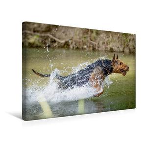 Premium Textil-Leinwand 45 cm x 30 cm quer Airedale-Terrier