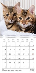 in love with 2 bengal kittens (Wall Calendar 2018 300 × 300 mm S