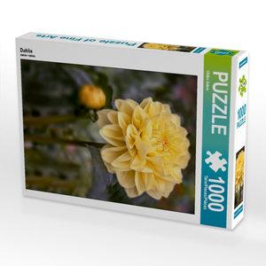 Dahlie 1000 Teile Puzzle hoch