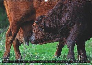 Das liebe Vieh (Wandkalender 2019 DIN A2 quer)