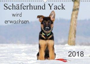 Schäferhund Yack wird erwachsen