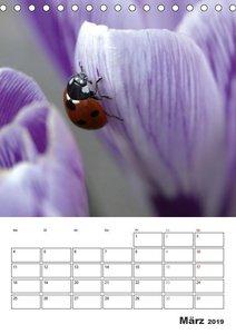 Marienkäfer - Der Geburtstagskalender (Tischkalender 2019 DIN A5