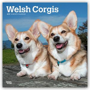 Welsh Corgis 2019 - 18-Monatskalender mit freier DogDays-App