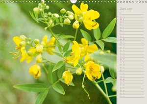 Tropenzauber - Floraler Geburtstagskalender
