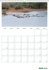 Afrika´s wilde Tierwelt / Planer (Wandkalender 2019 DIN A3 hoch)
