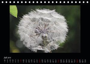 Faszination Pflanzenwelt - Unkraut, schön und wild (Tischkalende