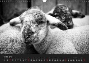 Landtiere (Wandkalender 2019 DIN A3 quer)