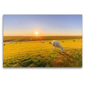 Premium Textil-Leinwand 120 cm x 80 cm quer Salzwiesen mit Schaf