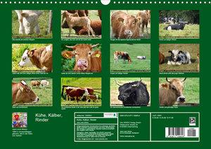 Kühe, Kälber, Rinder (Wandkalender 2020 DIN A3 quer)
