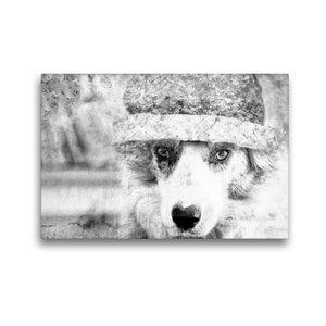 Premium Textil-Leinwand 45 cm x 30 cm quer Border Collie Bild au