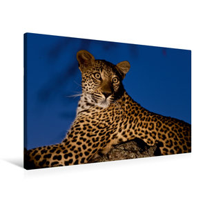 Premium Textil-Leinwand 90 cm x 60 cm quer Leopard auf seinem Li