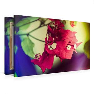 Premium Textil-Leinwand 75 cm x 50 cm quer Bougainvillea Blüten,