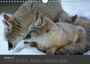 Tierpark-Gera (Wandkalender 2019 DIN A4 quer)