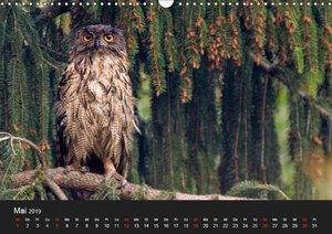Uhu - König der Nacht (Wandkalender 2019 DIN A3 quer)
